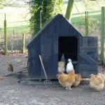 chicken coop shed