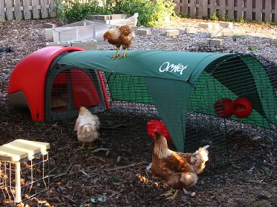portable chicken coop