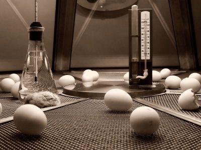 chicken incubators